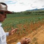 Don Deterlino Hinojosa, residente de Pasorapa, explicando la perdida de su sembradio (Foto de Leny Olivera)
